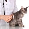 Ветеринарные клиники в Красном Яре